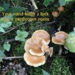 mushroom_mindkey.jpg